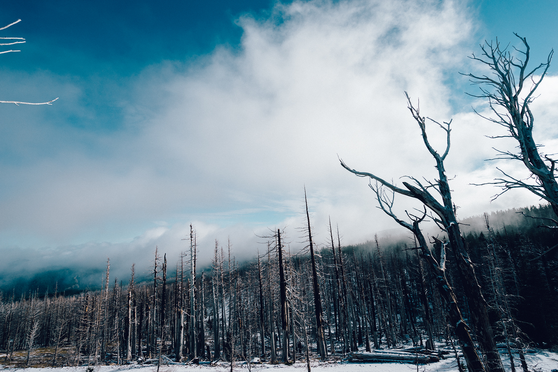 Inspiration of success mindset – winter forest