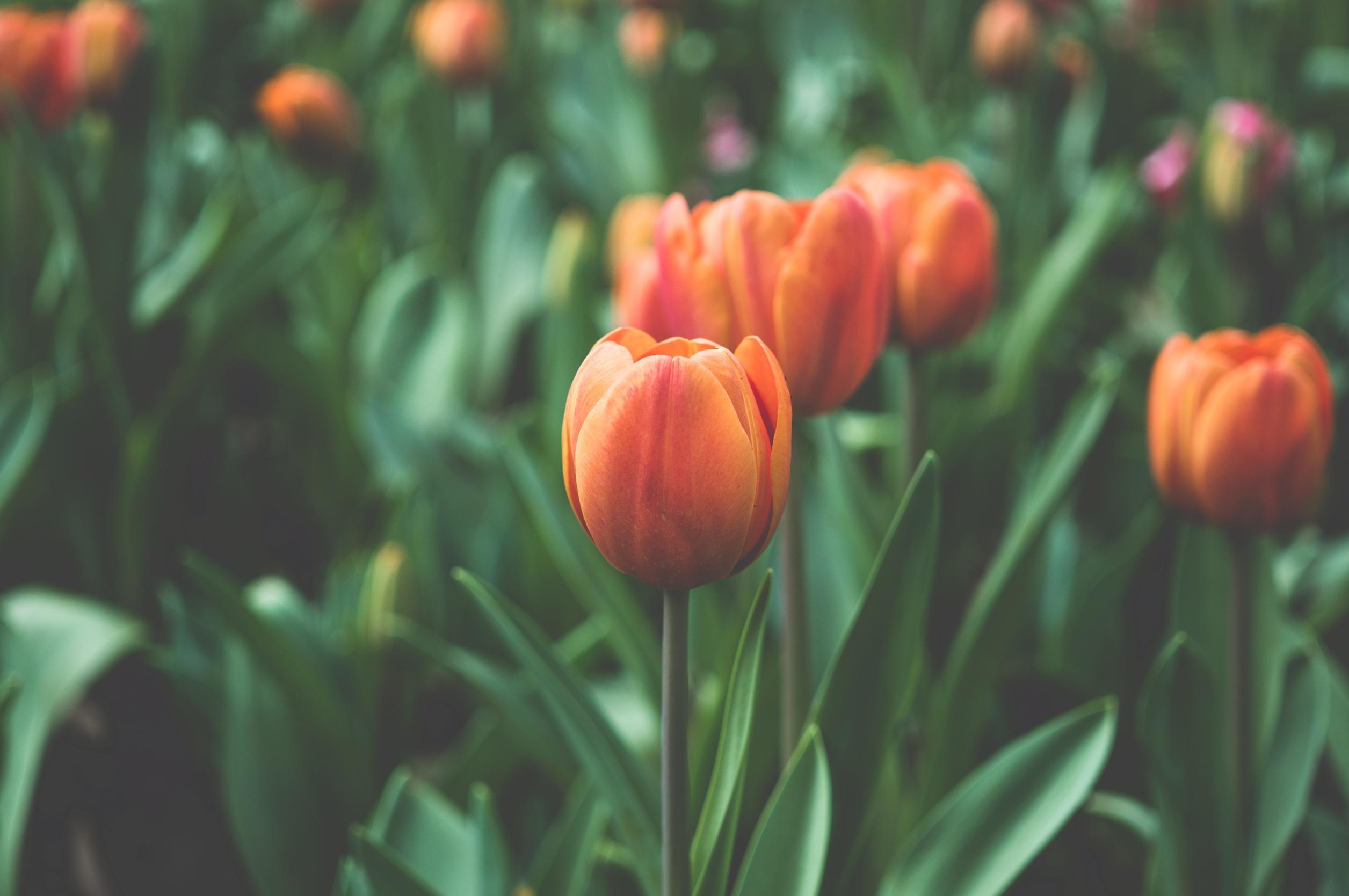 spring_website