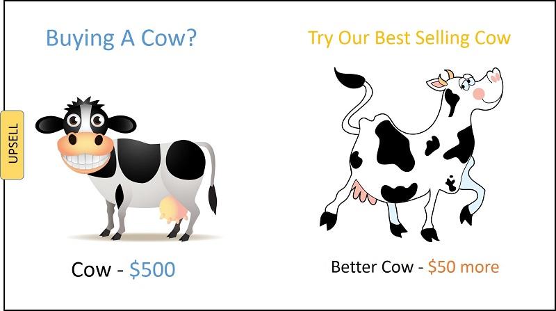 две коровы на белом фоне - шуточный пример допродаж