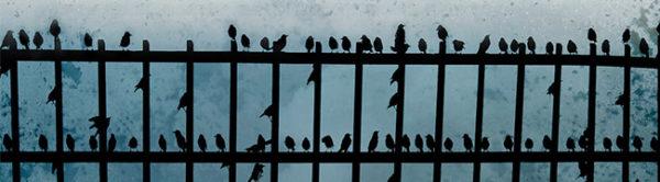 Металлический забор, на котором сидит большое количество небольших птиц