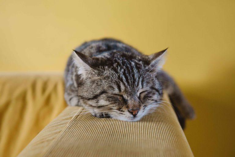 Отдыхающий в уединение серый кот